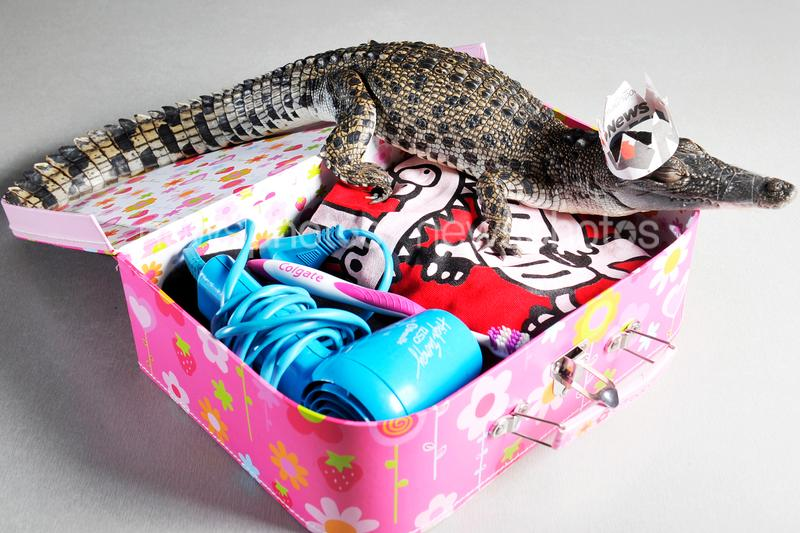 'George' The Crocodile Prepares For Royal Visit