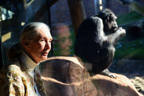 Primatologist Jane Goodall Visits Taronga Zoo