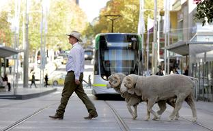 Wool Week Promotion In Melbourne CBD