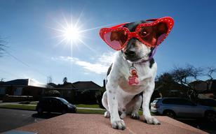Rescue Dog 'Rex' Tries On Show Dog Sunnies